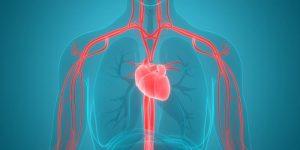 O que é o Sistema Circulatório?